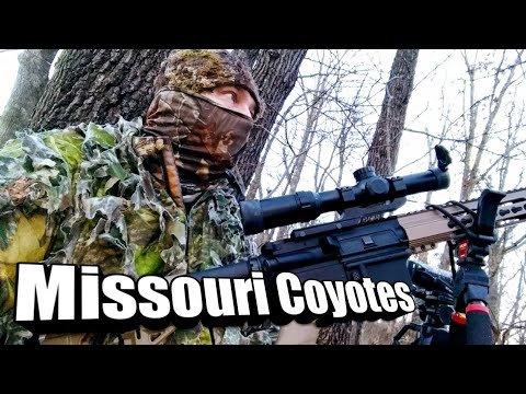 Missouri Coyote Hunting  In March