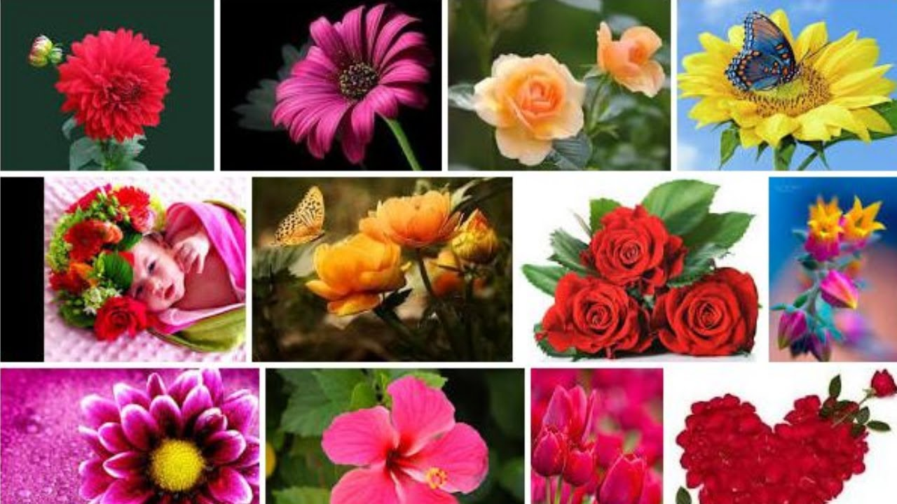 Flowers Name Learning Video Flowers Name For Children Flowers