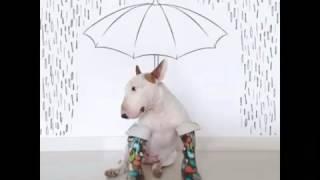 Este Artista Fez Algumas Ilustrações Divertidas Com O Seu Bull Terrier