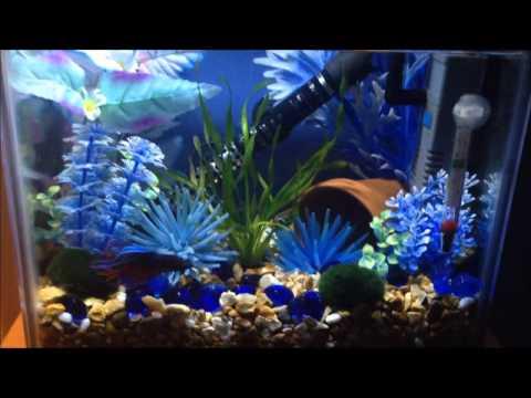 My 2 5 gallon betta fish tank crowntail betta fish for 2 gallon fish tank
