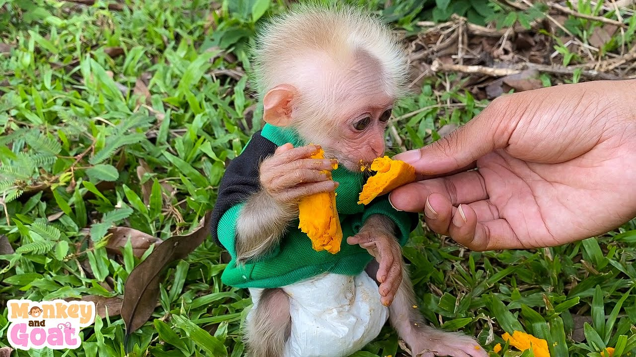 Take care of baby monkey is the best thing for me
