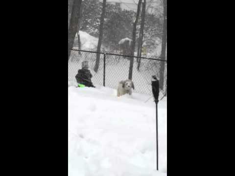 Snow falling in Mount Kisco.