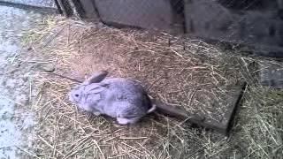 Плюсы и Минусы содержания кроликов в вольере.