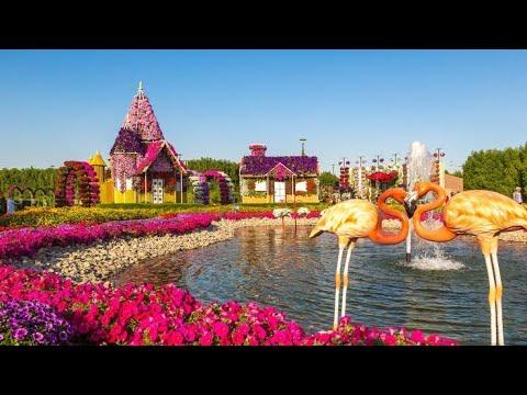 Dubai Miracle Garden Tour 2020 || جولة في حديقة دبي المعجزة 2020