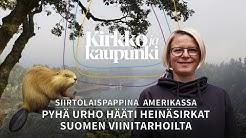 Siirtolaispappina Amerikassa - Pyhä Urho hääti heinäsirkat Suomen viinitarhoilta