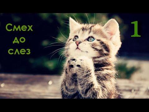 Смех до слез от этих котов
