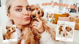 a-day-in-the-life-with-a-new-puppy-aspyn-ovard