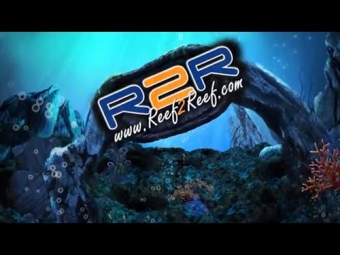 Reef2Reef TV Episode 16: Marine Parasites? Who you gonna call?