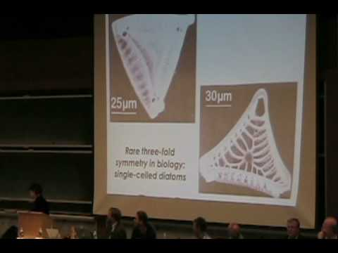 MIT Latke-Hamentashen Debate 2008 - Hazel Sive (H2)