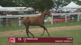The Chaser Day Paray   2016   Lot 70 : Lilymarlene
