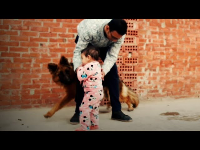 بنتي جودي واول مرة تشوف الكلبه لاسي عن قرب وتحدث المفاجأة الغير متوقعه