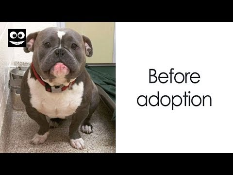 15+ Photos Of Dogs Before & After Their Adoption That Will Melt Your Heart