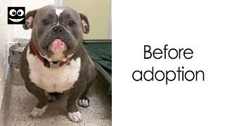 Photos Of Dogs Before & After Their Adoption That Will Melt Your Heart