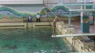 Соревнования по прыжкам в воду 03.12.16