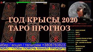Таро прогноз на 2020 год крысы. Алехандро Таро онлайн