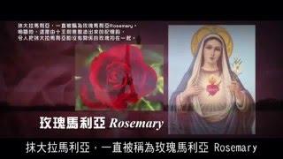 巴黎與玫瑰園計劃1戴安娜之死