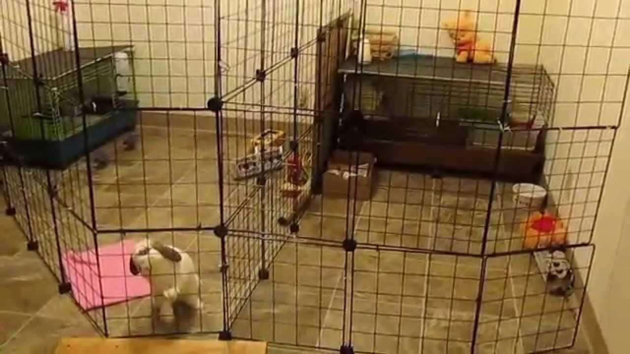 Rabbit cage set up for small space updated simple cost effective youtube - Youtube small spaces set ...
