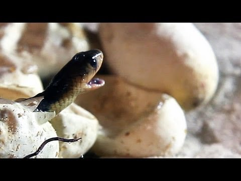 how to fish produce eggs