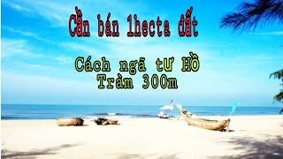 Cần bán 1hecta đất Hồ Tràm, cách ngã tư Hồ Tràm 300,giá 100tỷ