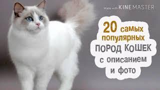 Какие бывают породы кошек.