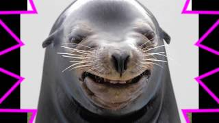 ~TRY NOT TO LAUGH!!!~ *HILARIOUS FUNNIEST ANIMAL FACES COMPILATION* | [BEST FUNNY ANIMAL VIDEOS]