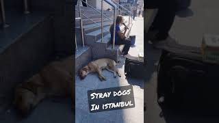 Dogs on the streets of Istanbul. Adorable Paws