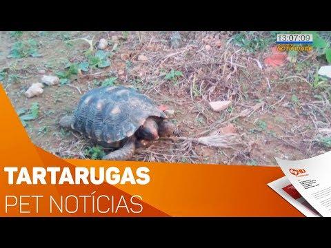 Pet Notícias: Tartarugas - TV SOROCABA/SBT