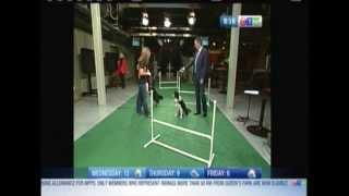 Ottawa Pet Expo Exhibitor Positive Changes Dog Training Featured On Ctv Morning Live