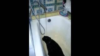 Кошка не умеет пить воду из под крана (The cat can not drink water from the tap)