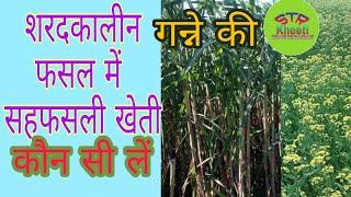 शरदकालीन गन्ने में सहफसली खेती में कौन सी फैसले ले सकते हैं।