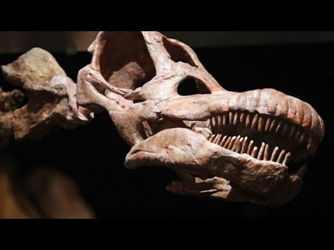 Titanosaur may be world