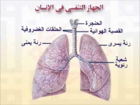 التنفس في الانسان - YouTube
