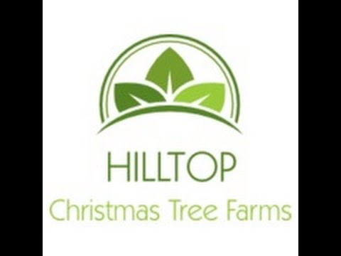 Image result for How To Buy Christmas Tree From Hilltop Through Online