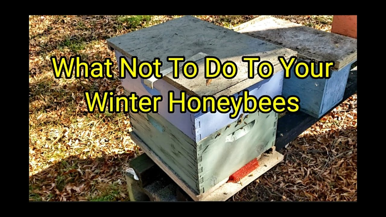 What Not To Do To Your Winter Honeybees