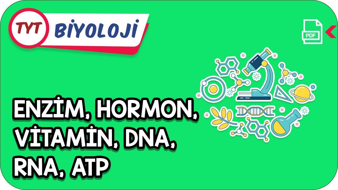 Enzim, Hormon, Vitamin, DNA, RNA, ATP   Kamp2021    #YazKampı