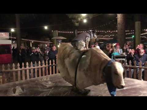 Jeff Kent - WATCH:  Dog rides mechanical bull