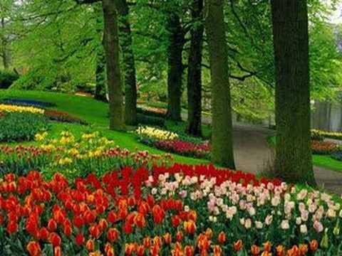 Tulipanes holanda youtube - Jardines de holanda ...
