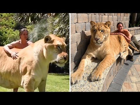 UNBELIEVABLE Friendships Between Animals And Humans!
