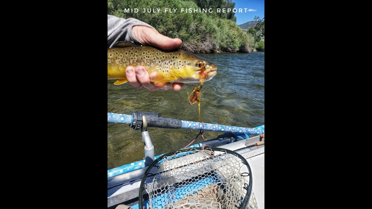 Mid July Upper Arkansas River Fishing Report