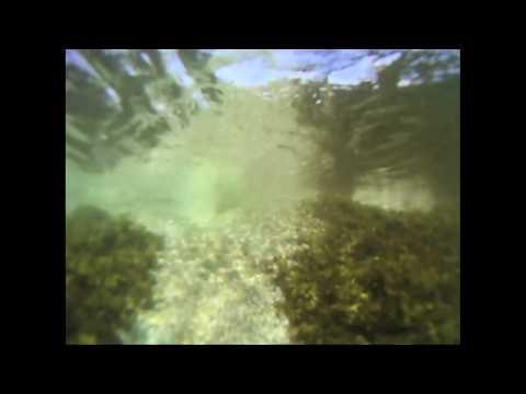 nanaimo,-bc---snorkeling-with-seals