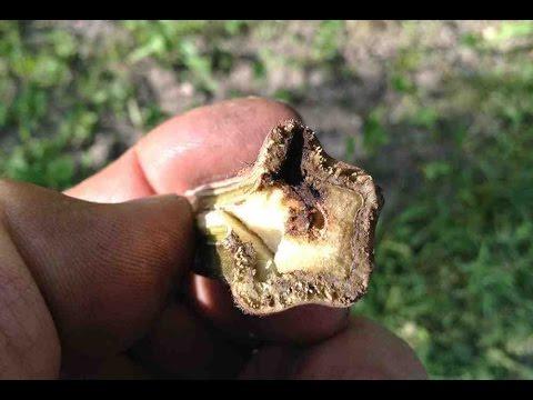 Как очистить микроволновку внутри уксусом, лимонной 69