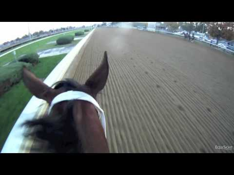 Havre de Grace Jockey Cam: Ride the Race with EquiSight and the Breeders' Cup in HD