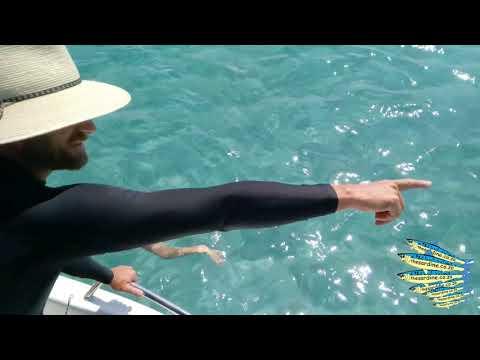 Marlin Strike On Recycled Kona Lure Off Bazaruto Island