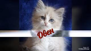 Какой  ты котёнок по знаку задиака ( читать описание)