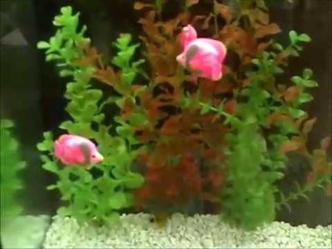 Fake Fish Aquarium