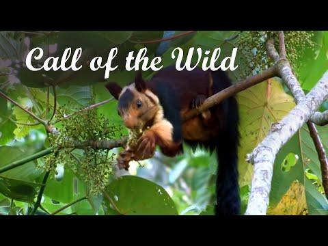 Call of the Wild - Promotional video Western Ghats, Kerala