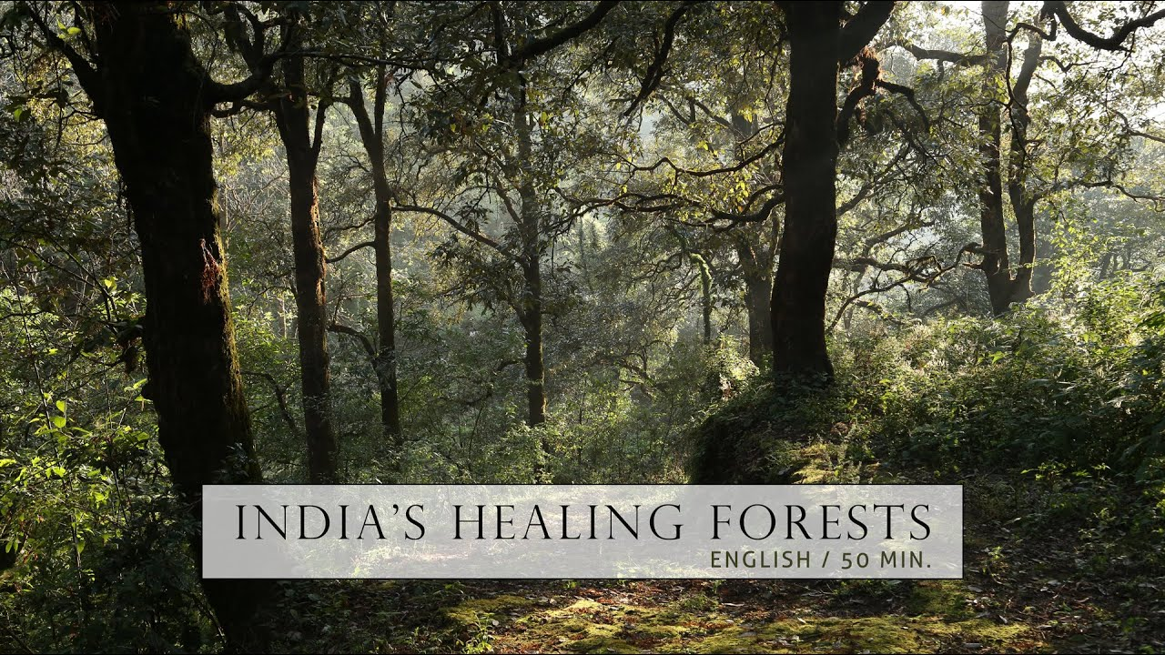 Nature Documentary - Healing Forests of India |  English | Full Film | Ad free