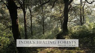 Documentary - Healing Forests of India |  English | Full Film 50 min. (Nature)