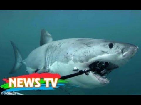 Vì sao cá mập thích cắn cáp quang biển?