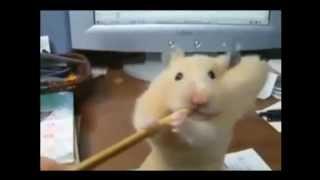 Приколы с животными 2013 ! Сборка лучших клипов YOUTUBE !
